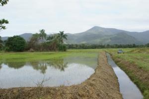 Plantações irrigadas com a água do rio